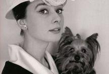 famosos y sus perros / perros