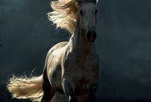 Paarden / Mooie foto's , citaten en tekeningen van paarden