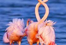 Birds/ Πουλιά