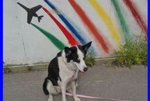 Wixu, the dog