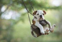 Bulldog ♡ Love
