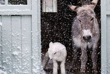 Rainy and snowy tales / by Serena