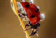Ladies in Red - The Little Lady Bug