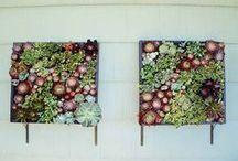 Design Inspiration: Plants