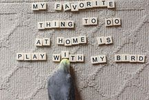 Birds & Ideas / DIY ideas for your birds
