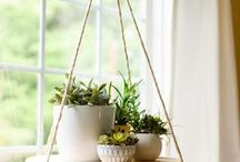 House plants / friendly and green