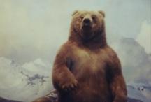 fauna / nature / animals