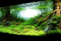 My aquarium. / Ideas for interesting, colourful and lively underwater world.