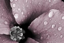 Color Style | Lilac , Mauve
