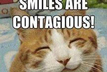 Cats / Cats. Oh god  cats