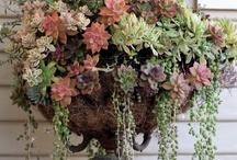 Garden planters vintage / Garden Designs for a Quiet Country Feeling