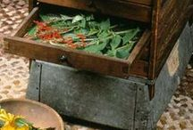 Herb Gardening / Great ideas for herb gardening outdoors, inside, on a patio.  Flavor your own food with fresh herbs!