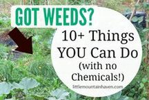 Weeds, Bugs and Critters / How to deal with weeds, bugs, and critters that invade your garden
