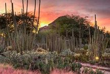 Desert Gardens / Ideas for desert gardens - it's amazing what people can do faced with such a challenging environment