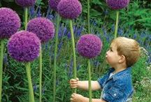 Kids Garden / Gardening ideas and tips for kids - how to get them interested/started