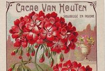 Seed Catalogs & Covers / Popular and seasonal seed catalogs and artistic covers (great for home decor projects, too!)