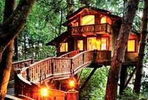 Tree Houses ❤️╰☆╮❤️ / ༺✿ WELCOME! ✿༻ Hope You Find Inspiration From My Boards. ツ ♡ I have no rules & limits, but don't copy my entire boards please. ツ ♡ If You Like What You See, Put a pin on it. ツ ♡ Let's Have Fun Together! ツ ♡ I am Happy to Share ツ ♡ Enjoy your visit ツ ♡ Pinning must be fun. ♡ Thank You For Following ツ ♡╰☆╮❤️❤️╰☆╮ ❤️╰☆╮❤️ / by Amalie McCarthy