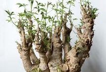 グッときた、植物 とか。