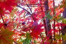 Leaves / Leaves, color or black & white