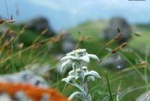 DOLOMITI / Dolomiti, Patrimonio dell'Umanità
