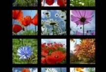 Les calendriers 2013 de Céline Photos Art Nature