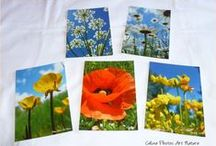 Les cartes postales de Céline Photos Art Nature