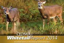 QDMA / We're a proud partner of the Quality Deer Management Association.