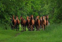 horses - konie