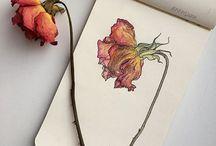Drawings /paintings