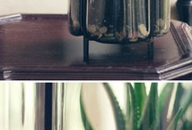 House plants / by Pam Curry