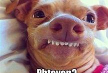 hahaha funny / by sydney whiteley