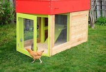 Chickens, one day...