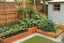 Veggie Garden / Veggie Garden Ideas