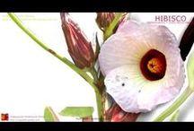 Videos de plantas medicinales / by Temas de Farmacognosia y plantas medicinales