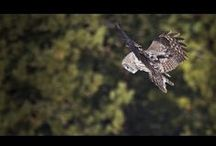 Wildlife Clips | Conservation Media / A selection of short wildlife clips from our field production work over the years. / by Conservation Media