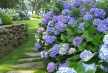 Budapest Garden Ideas