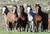 HORSES / by Sandra Sanabria