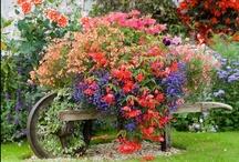 Gardens/flowers / by Linda Schroeder