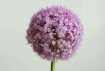 Подарки: Цветы