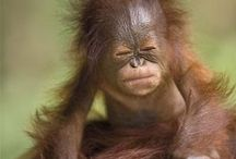 Cute animals / Pictures of cute and cuddly animals
