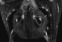 Cute bats :)