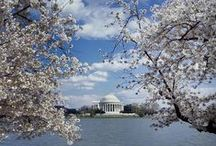 Cherry Blossoms / The beautiful trees that were a gift from Japan to Washington, D.C. in 1912 have inspired artists and photographers for more than a century.