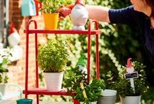 Vegetable garden / Vegetable Garden