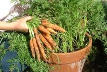 Gardening and Urban Farming / Gardening and Urban Farming, including tips and tricks.