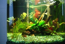 My Fish Tank / My Interpet 48 litre tropical fish tank. There are shrimps, albino corydoras,tiger barbs, and snails in the tank | Fish aquarium review site helping beginner fish hobbyists choose the best aquariums • Tropical, marine & custom made fish tanks | WhichFishTank.com