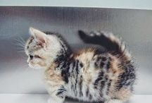 Adorable / Heart melting, adorable animals