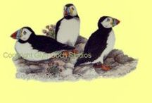Welsh Wildlife / Designs used to decorate our fine bone china