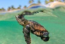 Belizean Wildlife