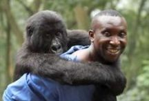 Virunga / A small team of park rangers battle to protect UNESCO world heritage site of Virunga National Park from armed militia, poachers, and dark forces struggling to control Congo's rich natural resources.