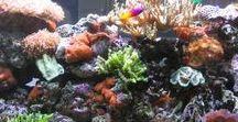 Tropical Fish Tanks / Tropical Fish Tanks | Fish aquarium review site helping beginner fish hobbyists choose the best aquariums • Tropical, marine & custom made fish tanks | WhichFishTank.com